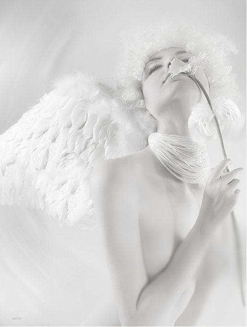 white angel wings flower • white on white