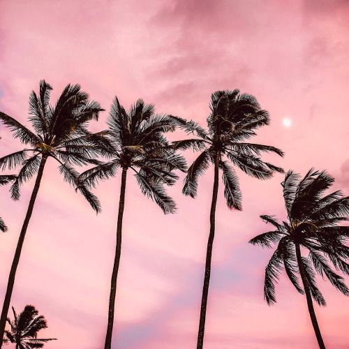 pink skies and palm trees