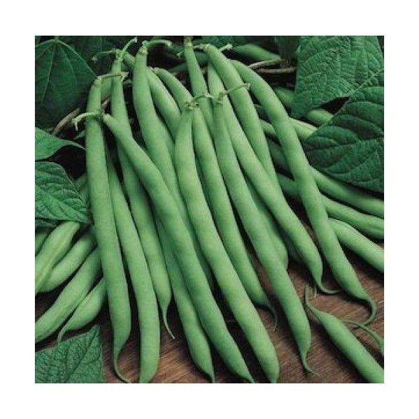 32 Best Bean Seeds Images On Pinterest Bean Seeds Free 400 x 300