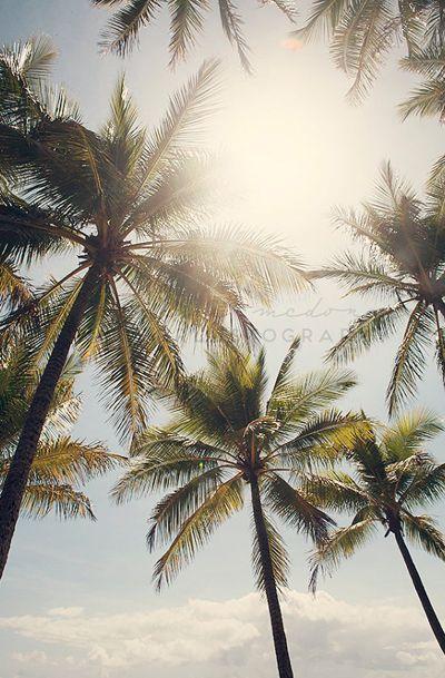 Standing in the Sun - Photographic Print - Palm Tree, Australia, Bohemian, beach