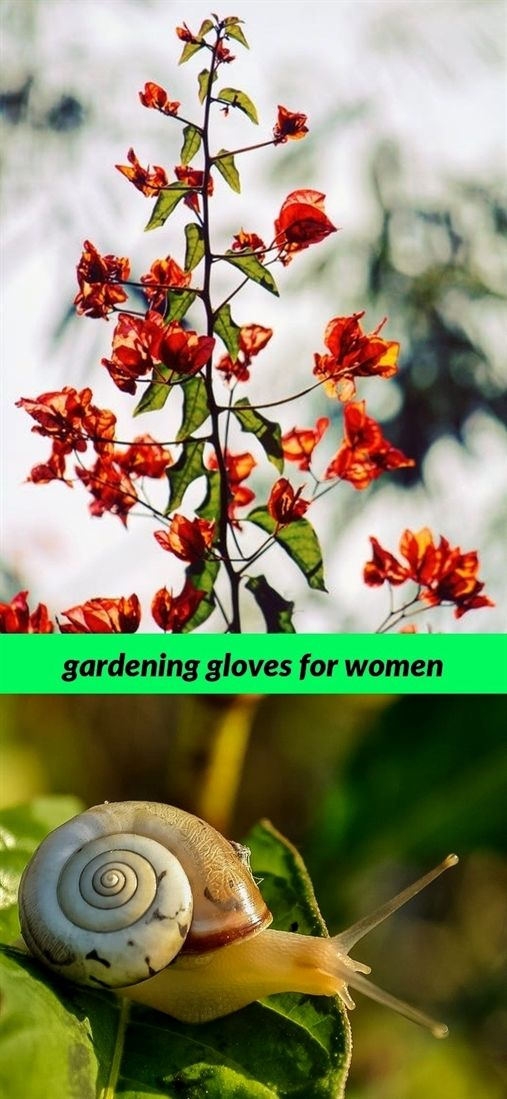 Gardening Gloves For Women 288 20180808064452 53 Greenhouse Garden Tools And Equipment W Names