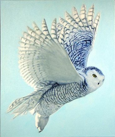 Female Snowy Owl--she is more heavily barred. Stunning colors. wow.