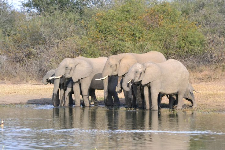 Elephant at Lion Pan S21