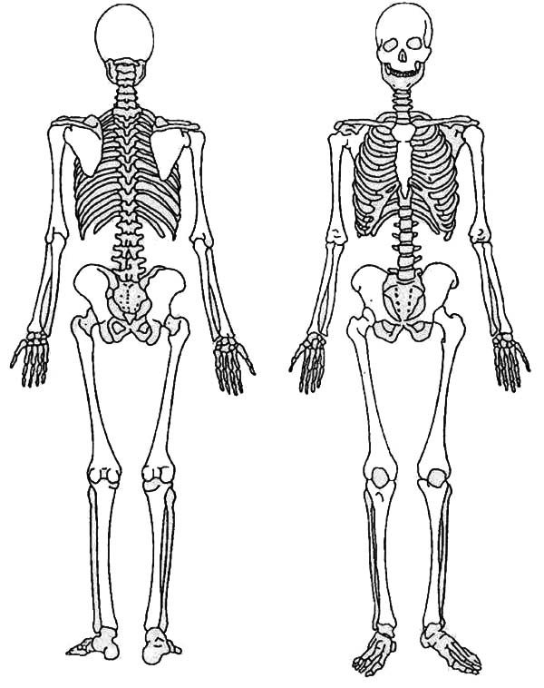 back and front of a skeleton coloring page