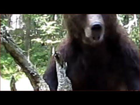 Медведь Нападение медведя Выживание в лесу Охота Рыбалка Выживание Тайга...