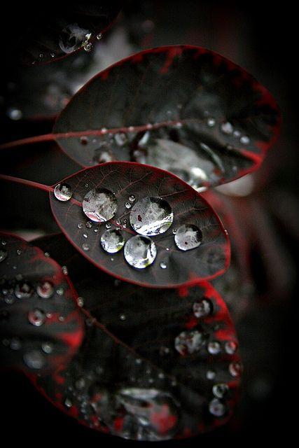 ✯ Droplets