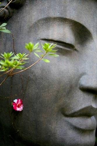 buddha. http://www.calmdownnow.com