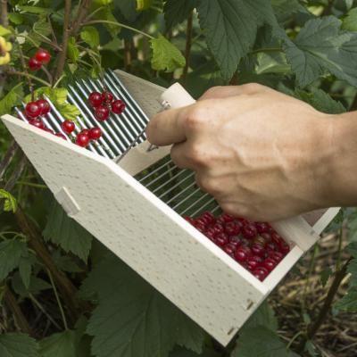 Berry picker / berry comb