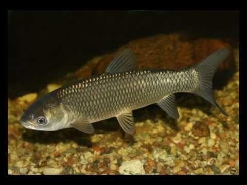 17 A vízpart növény és állatvilága Halak - YouTube