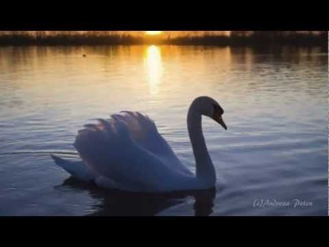 "ELDAR MANSUROV - ""Elegy - Requiem""(Relaxing music) - YouTube"