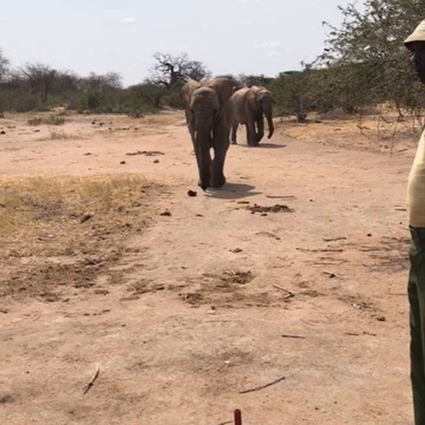 """6,078 Likes, 124 Comments - explore.org (@exploreorg) on Instagram: """"Feeding Time. Tsavo, Kenya. Explore is working with the David Sheldrick Wildlife Trust to help curb…"""""""