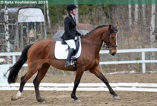 Polish Half-Bred mare Colia-Pol Smak (ex. Colia-Polsmak)