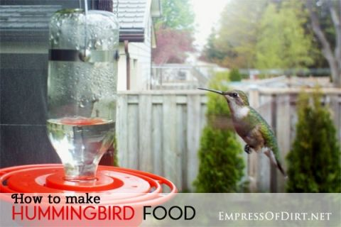 How+to+make+hummingbird+food+and+choose+the+best+hummer+feeder
