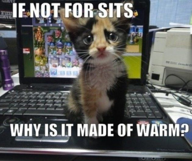 """""""If not for sits, why is it made of warm?"""""""