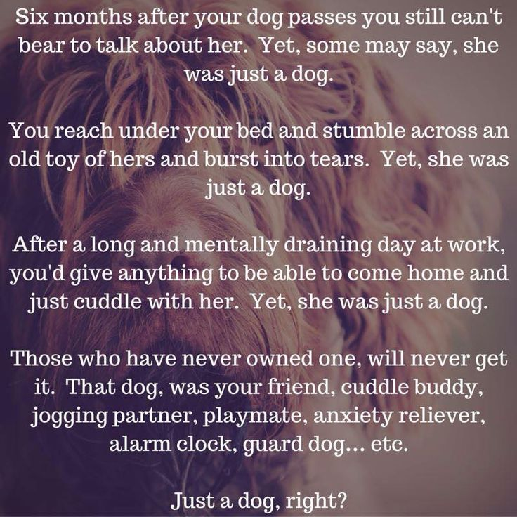 """""""Just a Dog"""" are three words that can tick me off in an instant, as with the people who say them."""
