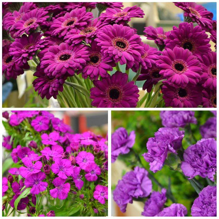LUST AUF SOMMER // Diese #Farben machen Lust auf den #Sommer! Zwischen den #Rosé- und Violetttönen finden sich die kleinen hellen #Blüten der #rosa Kalanchoe sowie leuchtende #Germinis. Traumhafte #Rosen treffen auf große und kleine #Nelken. // Lieferbar bis zum 09.09.2015 // #lila #violett #roses #flowers #blumen #summer #colorful #blume2000 #blume2000de