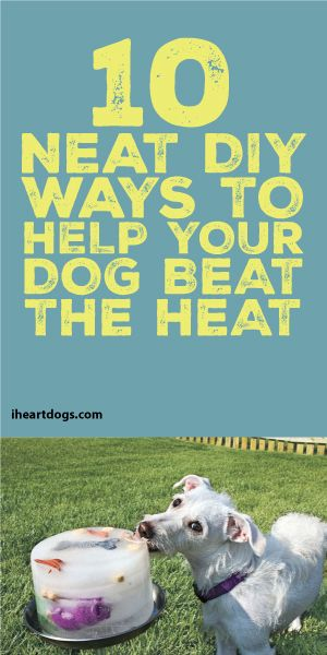 10 Neat DIY Ways To Help Your Dog Beat The Heat!