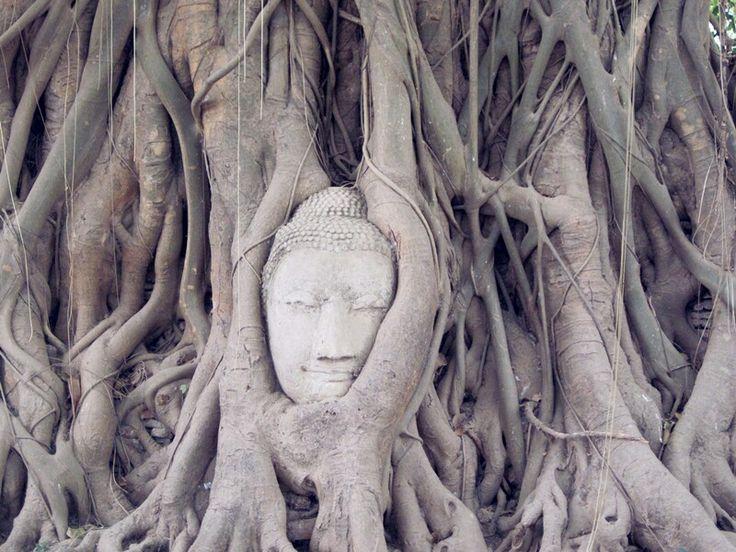 Wat Mahathat - Ayutthaya, Thailand
