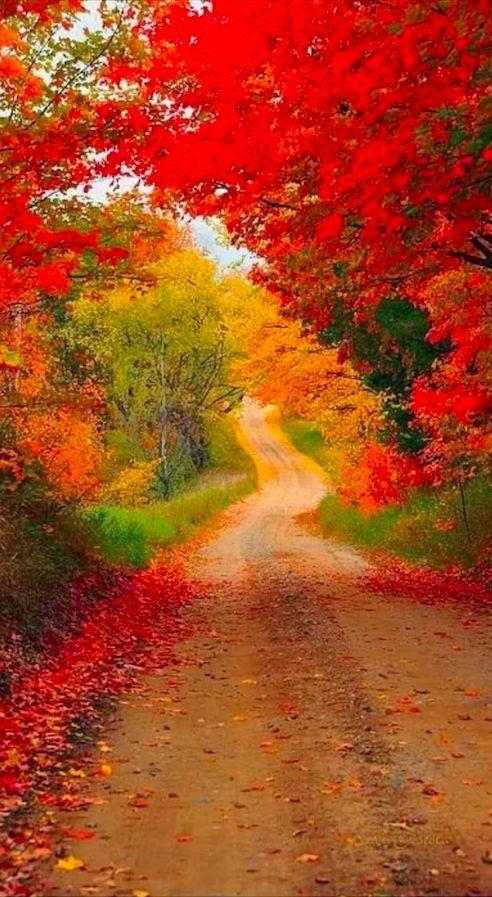 Autumn Road....