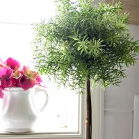 DIY topiary