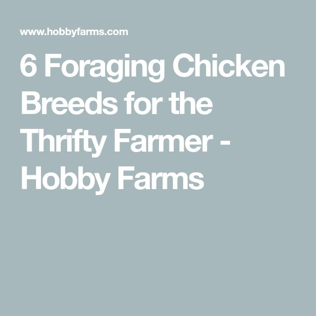 6 Foraging Chicken Breeds for the Thrifty Farmer - Hobby Farms