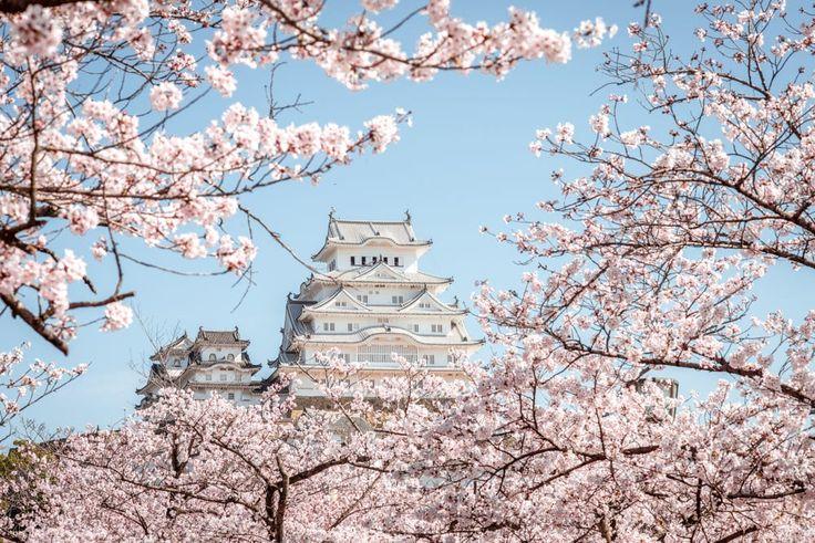 Himeji Castle in cherry blossom season by Ke Wei Tsai on 500px