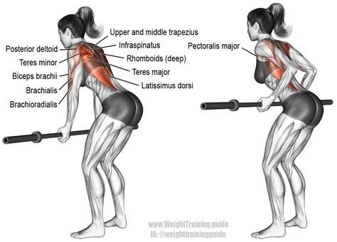 Underhand Yates row. A compound back and arm exercise. There is no target muscle. Many muscles of the arm and back work in synergy. Synergistic muscles: Upper and Middle Trapezius, Rhomboids, Latissimus Dorsi, Teres Major, Posterior Deltoid, Infraspinatus, Teres Minor, Biceps Brachii, Brachialis, Brachioradialis, and Sternal (Lower) Pectoralis Major. Visit site to learn the differences between the Yates row and the bent-over barbell row.