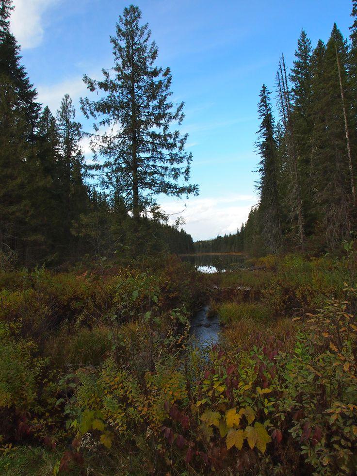 Shadow Lake, Wells Gray, near to Kamloops, BC, Canada.  October 2012