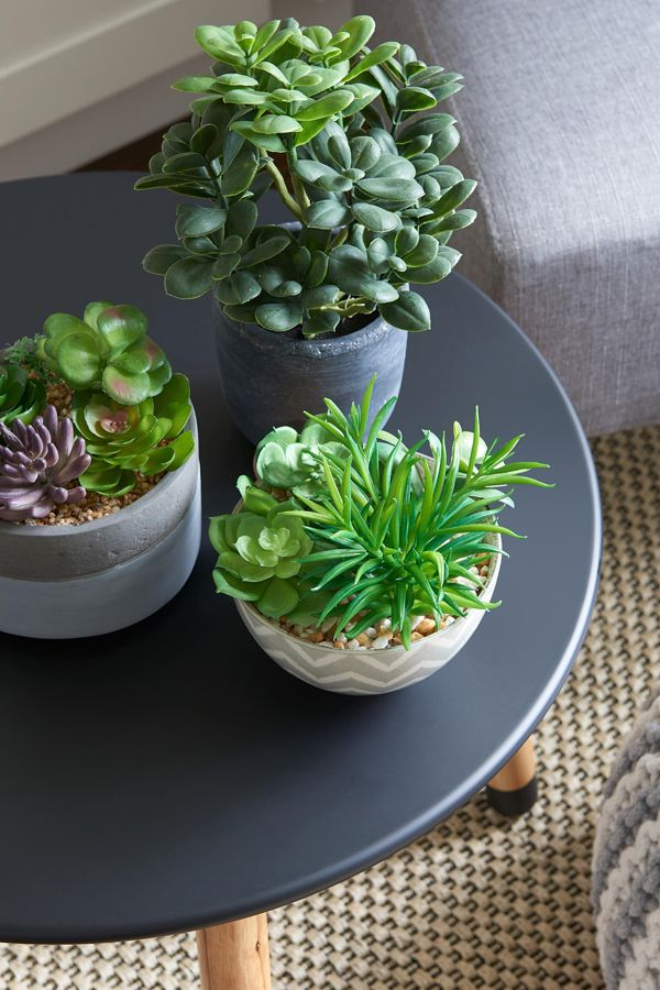 "A trio of cacti in concrete pots ""pop"" against a smooth black table surface."
