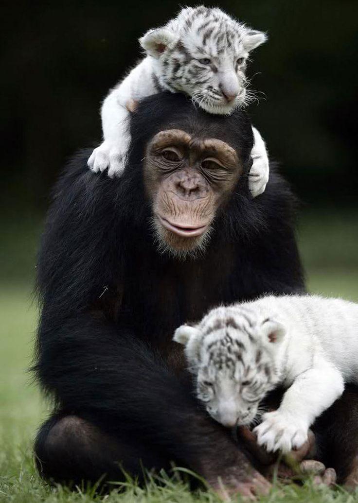 30 amitiés improbables entre animaux de différentes espèces qui prouvent que la…