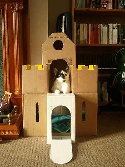 Best 25 Cat Playhouse Ideas On Pinterest Inside