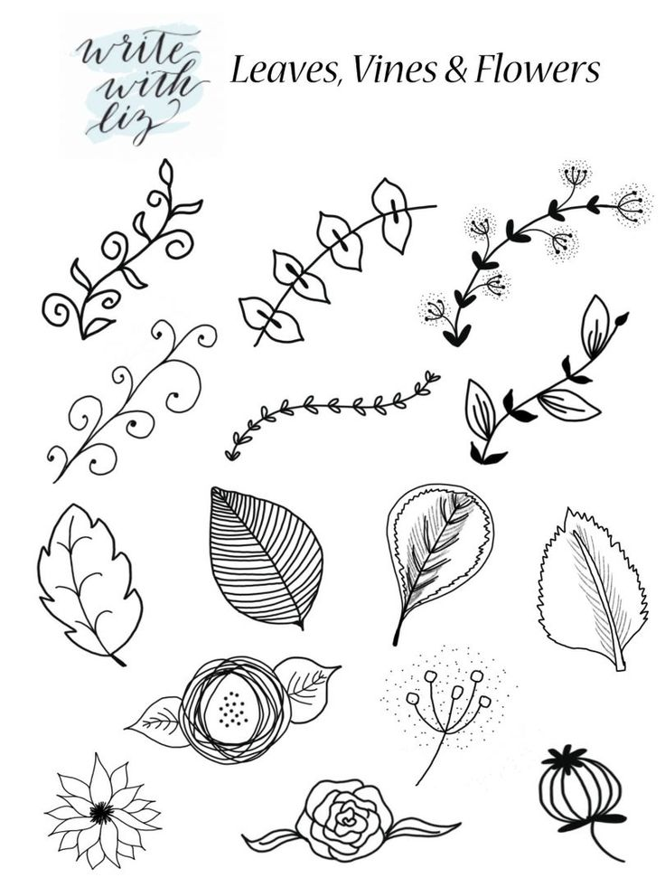 Leaf Flower Vine Accents Write With Liz for Dawn Nicole 4