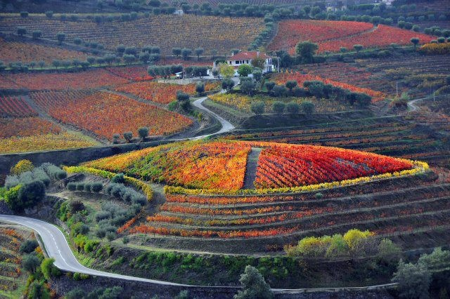 Douro vineyards - PORTUGAL. First world demarcated wine region. UNESCO world heritage. Where Port wine comes from.