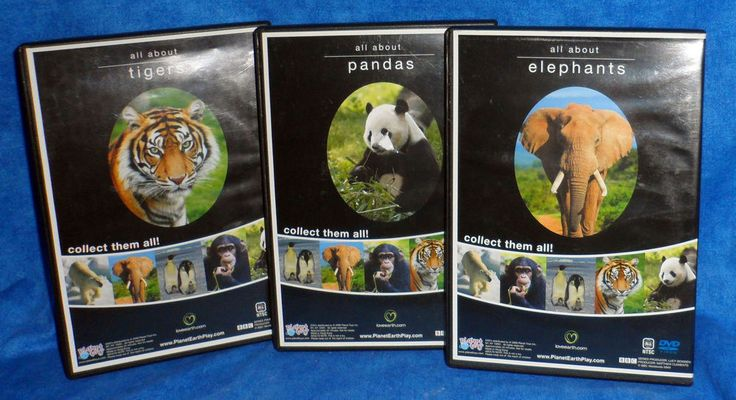 Animal Planet All about Tigers, All about Pandas, all about Elephants 2008  E10 #AnimalPlanet