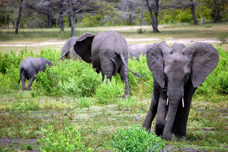 Selouse, Tanzania