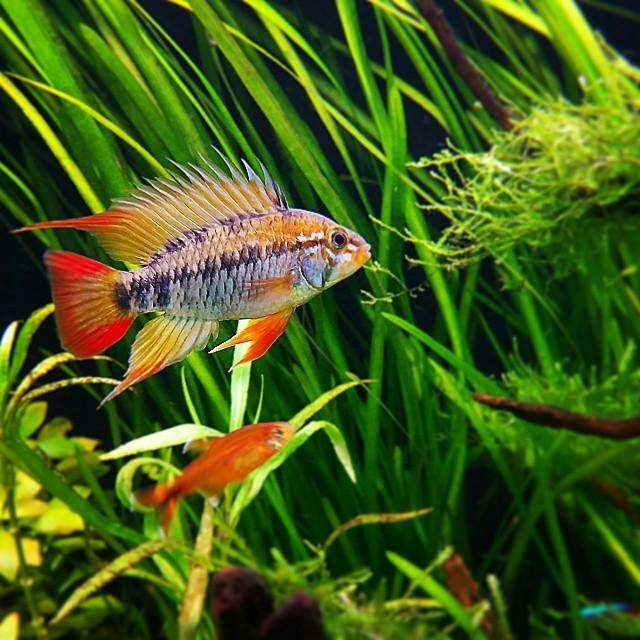 1000 images about poisson aquarium on pinterest for Florida tropical fish