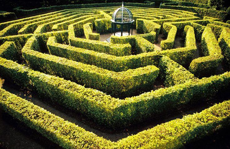 La poursuite dans le labyrinthe de la reine (alias Sylvia).