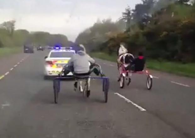Corsa clandestina con i pony. Travellers, in piena gara, sopra un carretto trainato da pony sfrecciano in mezzo alle auto con tanti fan a seguito che li incitano.