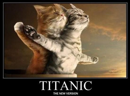 Titanic: Cats, Funny Cat, Let Go, Titanic Cat, Funny Stuff, Kittens, Kitty, Animal, Titaniccat