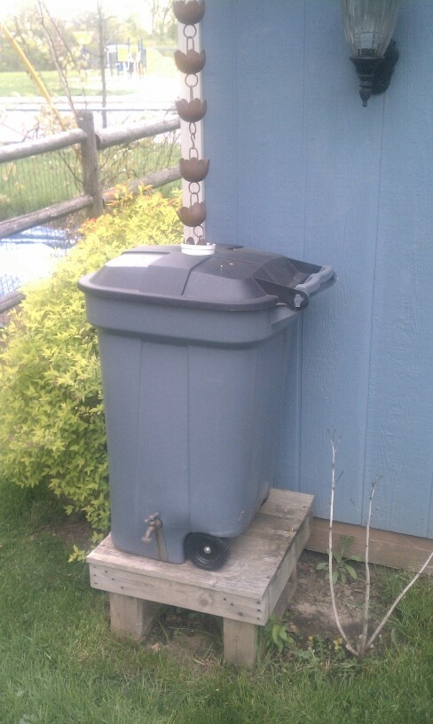 My $20.00 rain barrel. Picked up the materials during the winter when everything was on clearance. Paid $8.00 for the trash can. $4.50 for the rain chain. I had the faucet and filter screen for inside. Drilled out and installed the faucet, cut a hole in top and installed a PVC gutter connector for rain chain. Built the platform out of scrap pallet wood.