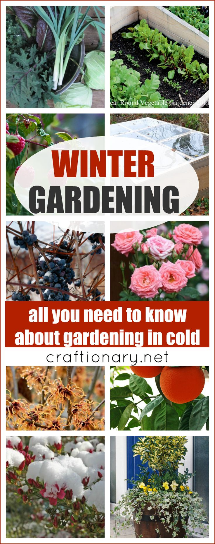 Keep your garden safe from cold and ready for next spring with these great tips for plants, flowers and trees. #gardening #winter