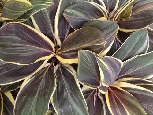262 Best Images About House Plants On Pinterest