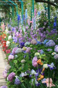 From Monet's Garden at the New York Botanical Garden: Delphiniums, foxgloves, roses, hydrangeas, peonies, tulips, a sensuous abundance of flowers, colors, fragrances. #prettygarden