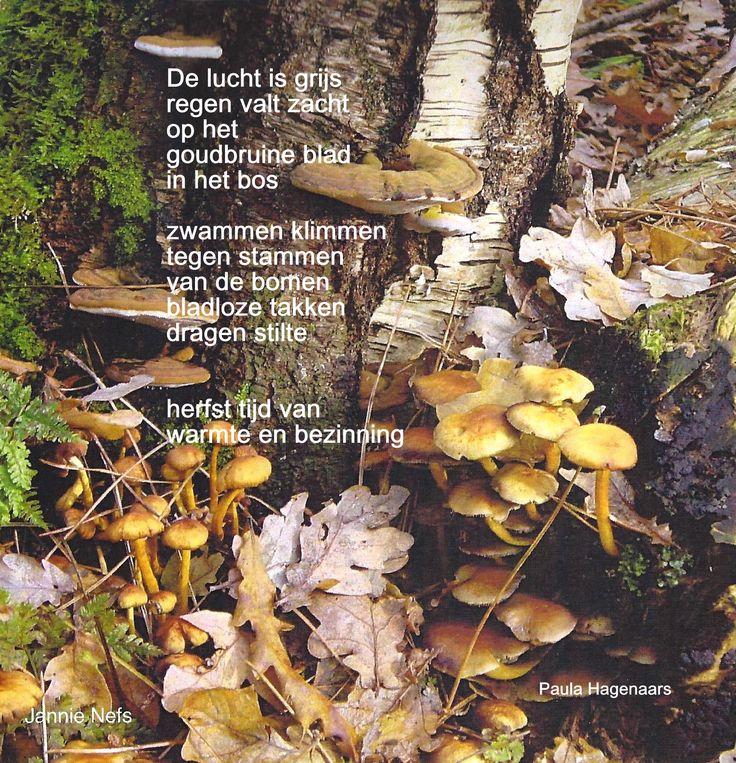 Citaten Over Herfst : Beste ideeën over herfst citaten op pinterest giving