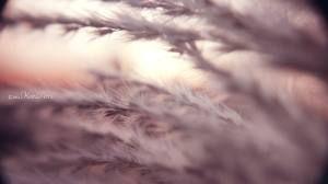 Image result for softness