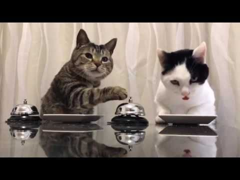 Officially...Archangel641's Blog: Cats Ring Bell for Food!