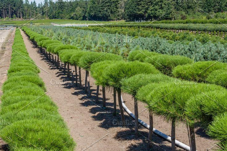 Hop plants on trellis Sponsored , PAID, hopField