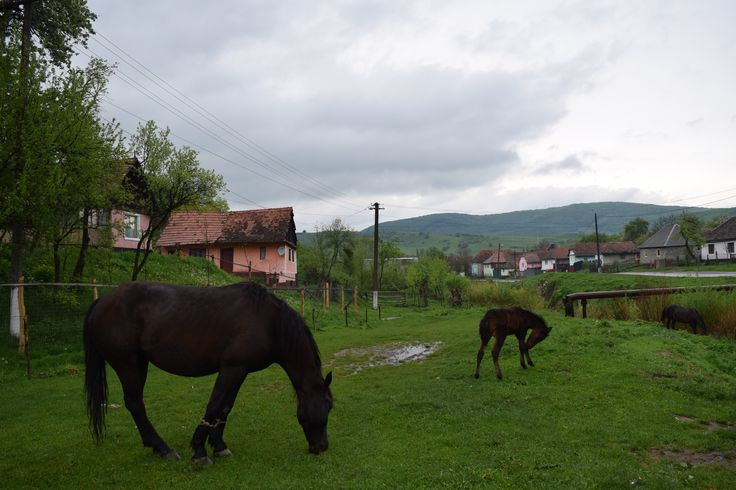 http://lejean-travels.com/viscri/