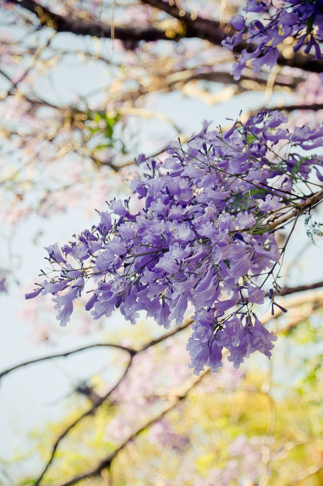 flower  Increase Your Followers On Pinterest  http://www.ninjapinner.com/idevaffiliate/idevaffiliate.php?id=212