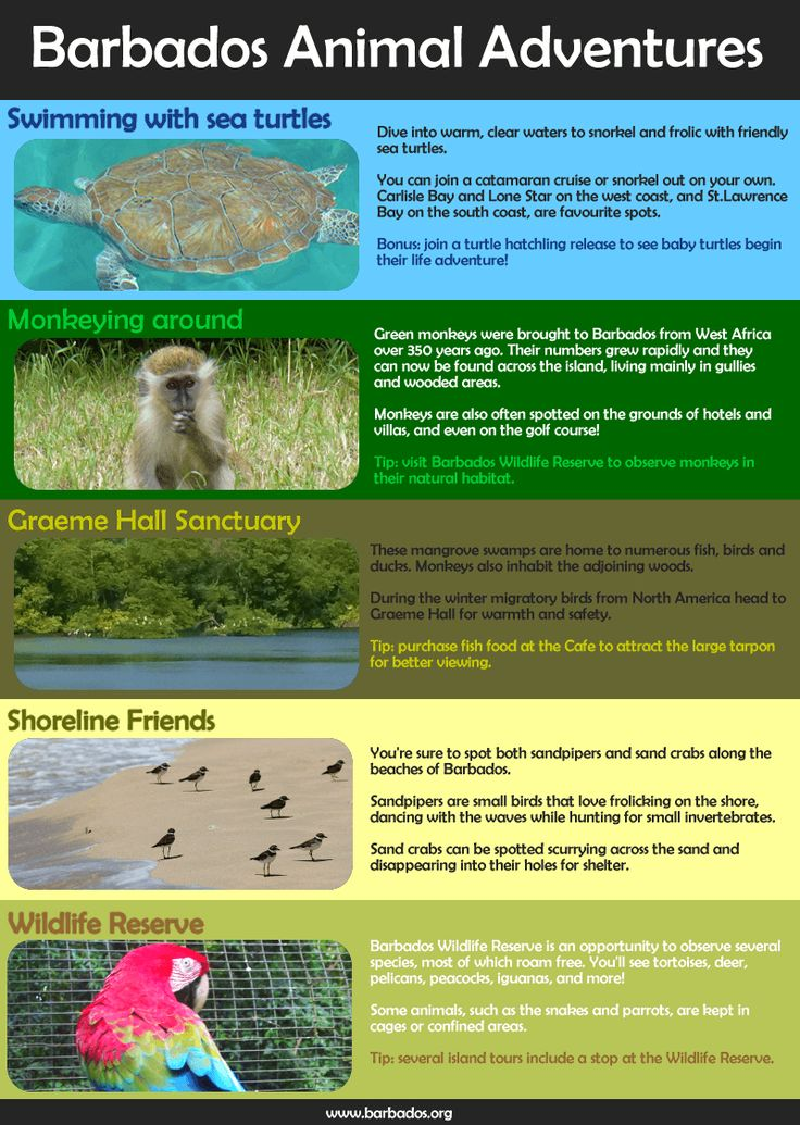 Discover the amazing animals that call Barbados home!